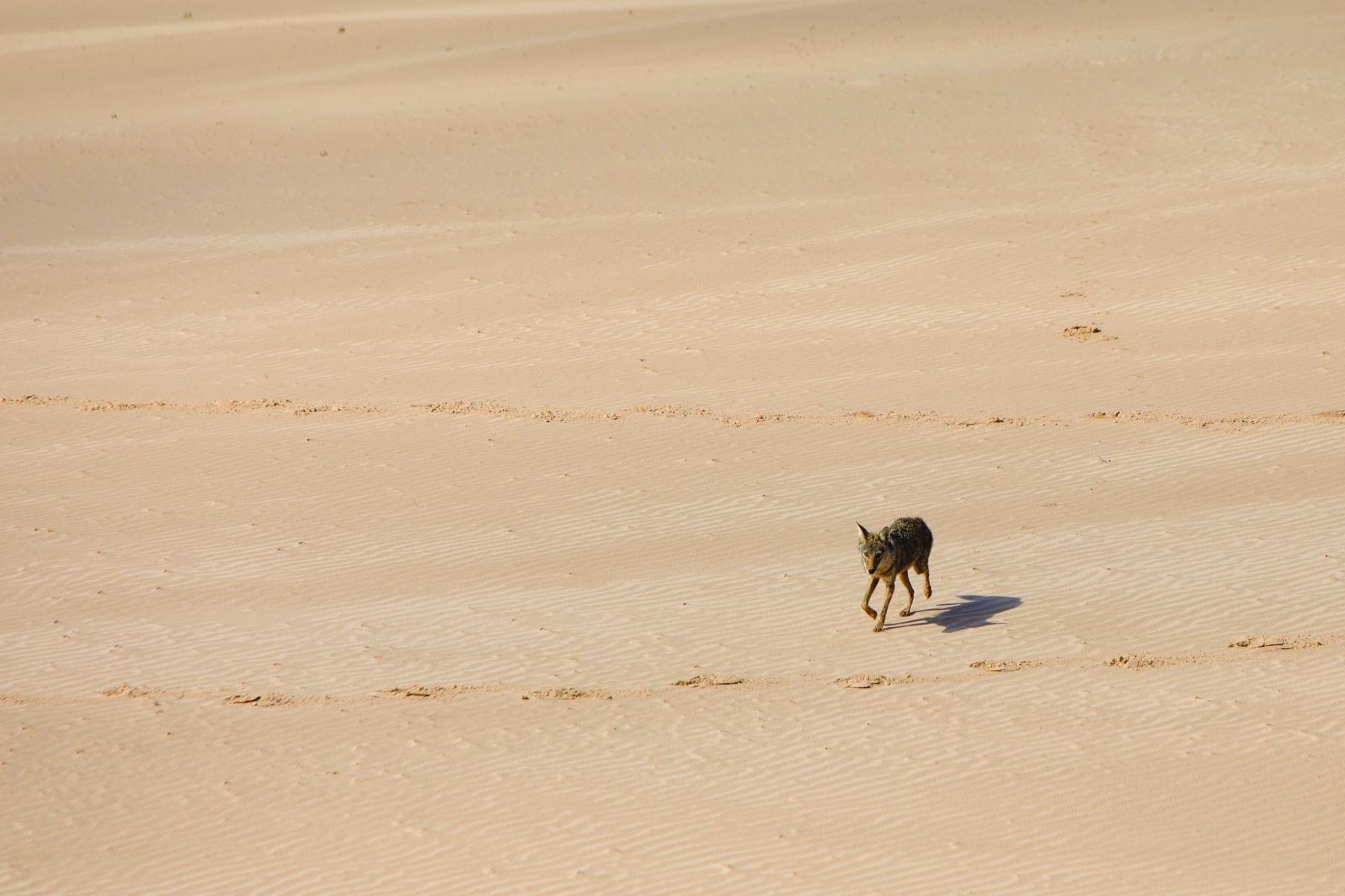 Dune Wildlife