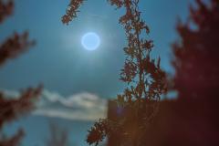 Alexa Forgione, Two-Tone Sun