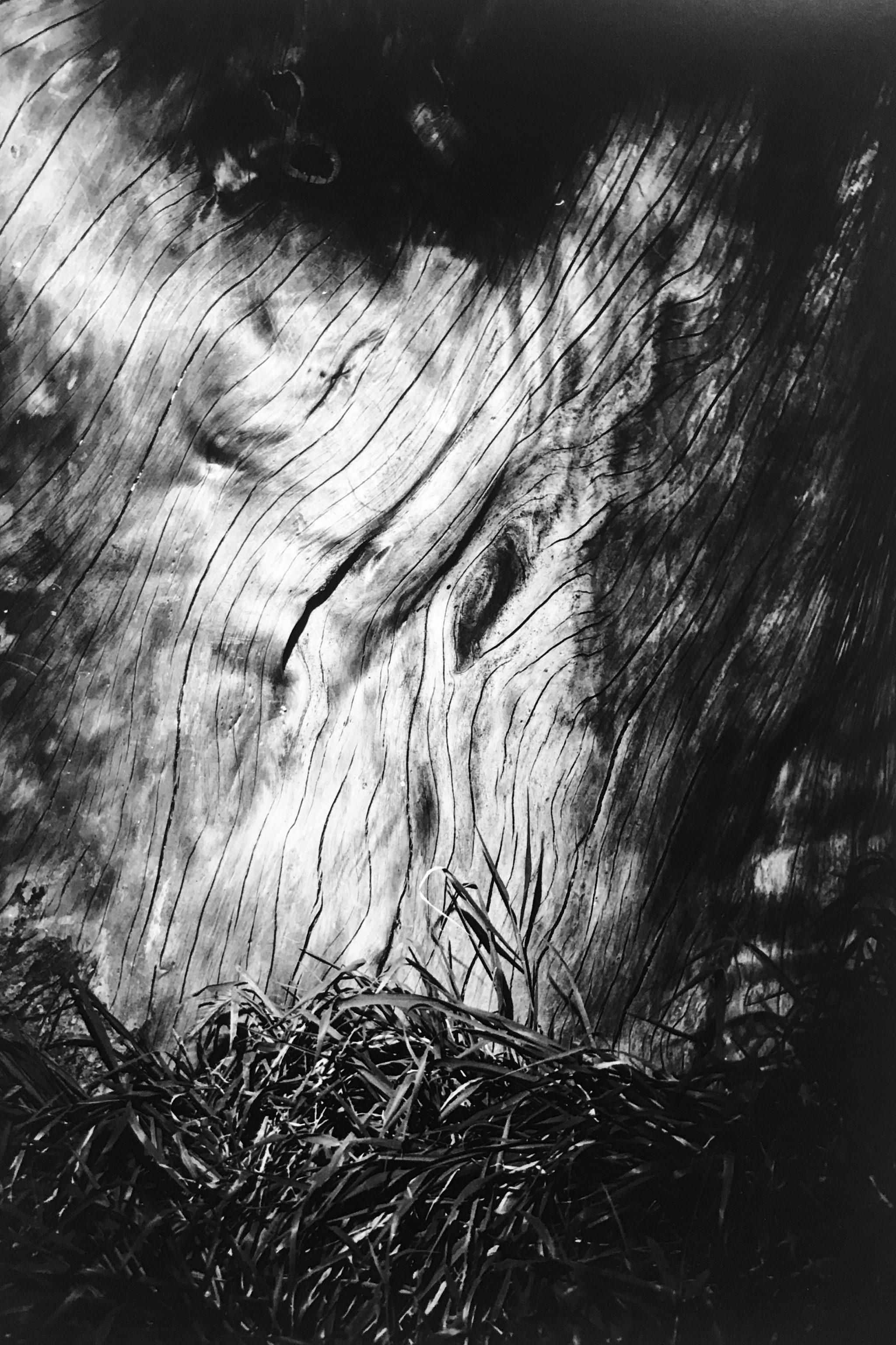 """Alberi""  Photographs by Marco Gualtieri"